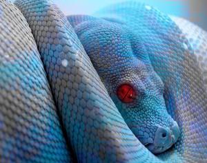 Evil-the snake